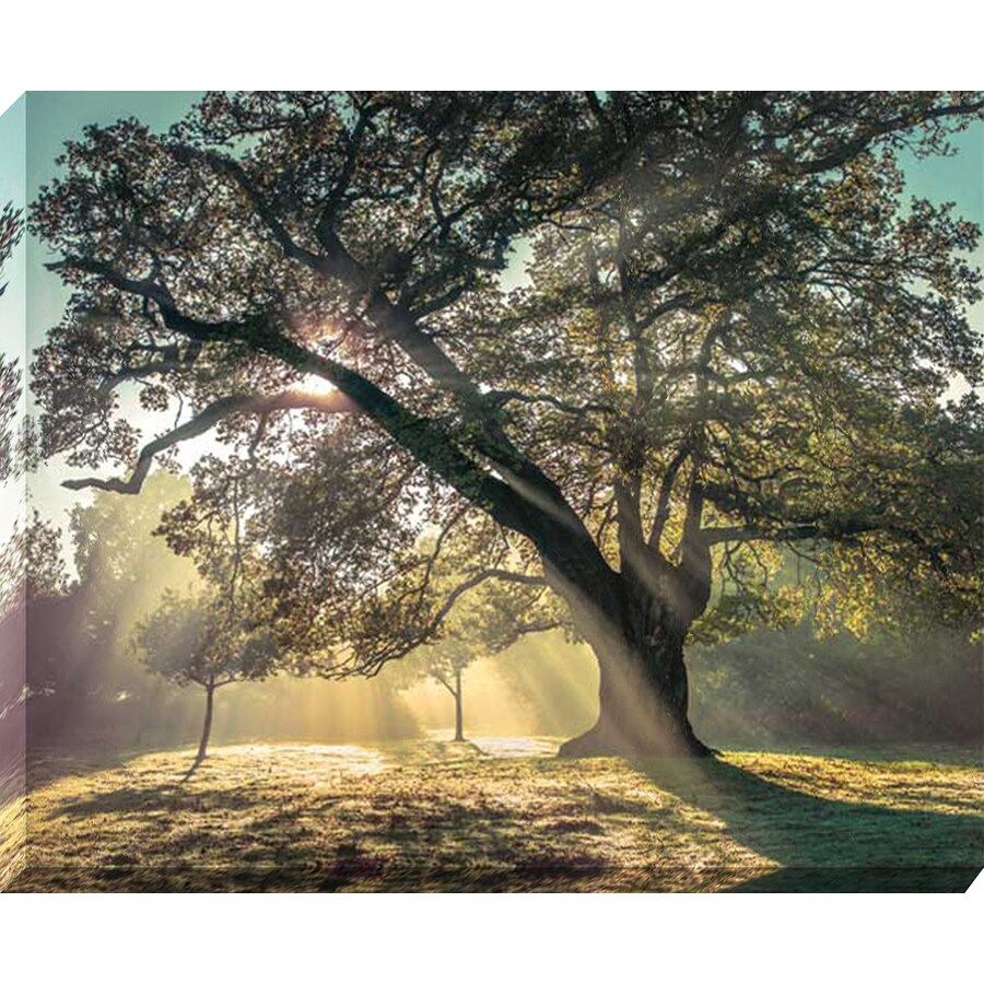 37-in W x 30-in H Canvas Landscapes Wall Art
