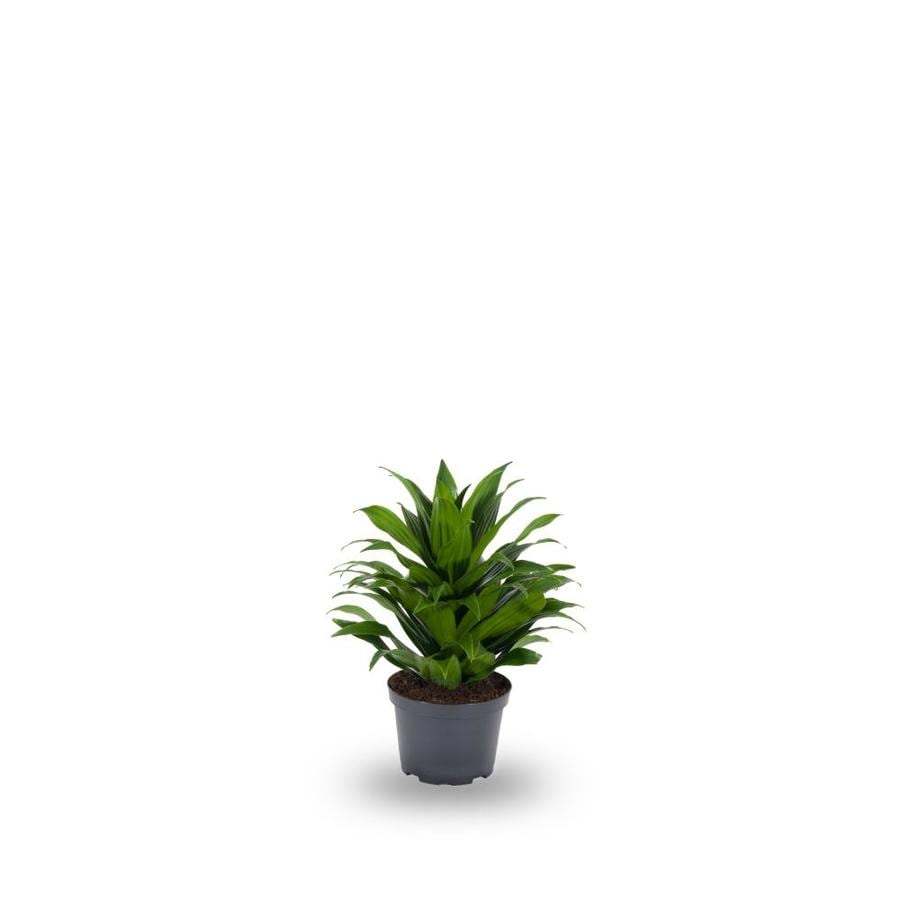 House Plant Janet on house people, house candy, house decorations, house ferns, house cars, house chemicals, house plans, house gifts, house vines, house family, house slugs, house design, house flowers, house rodents, house fire, house crafts, house home, house nature, house stars, house mites,