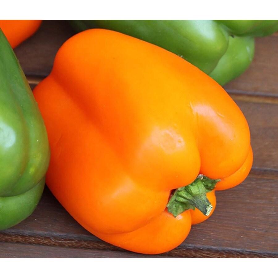 Seeds Of Change Orange California Wonder Bell Pepper Organic Vegetable Seed Packet
