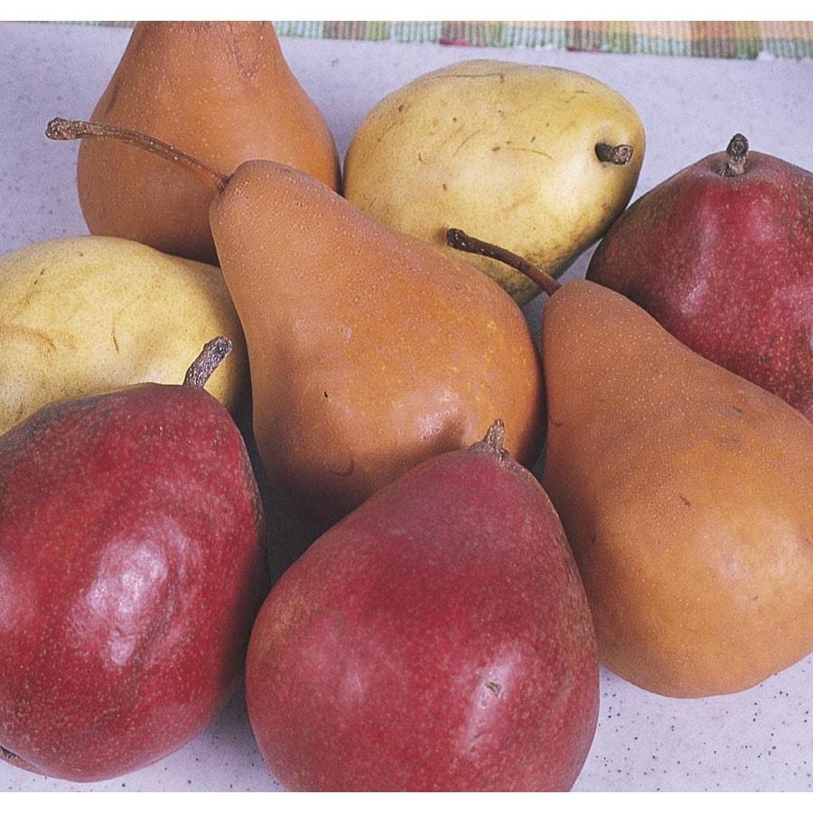 9-Gallon 3-n-1 Pear Tree (L10497)