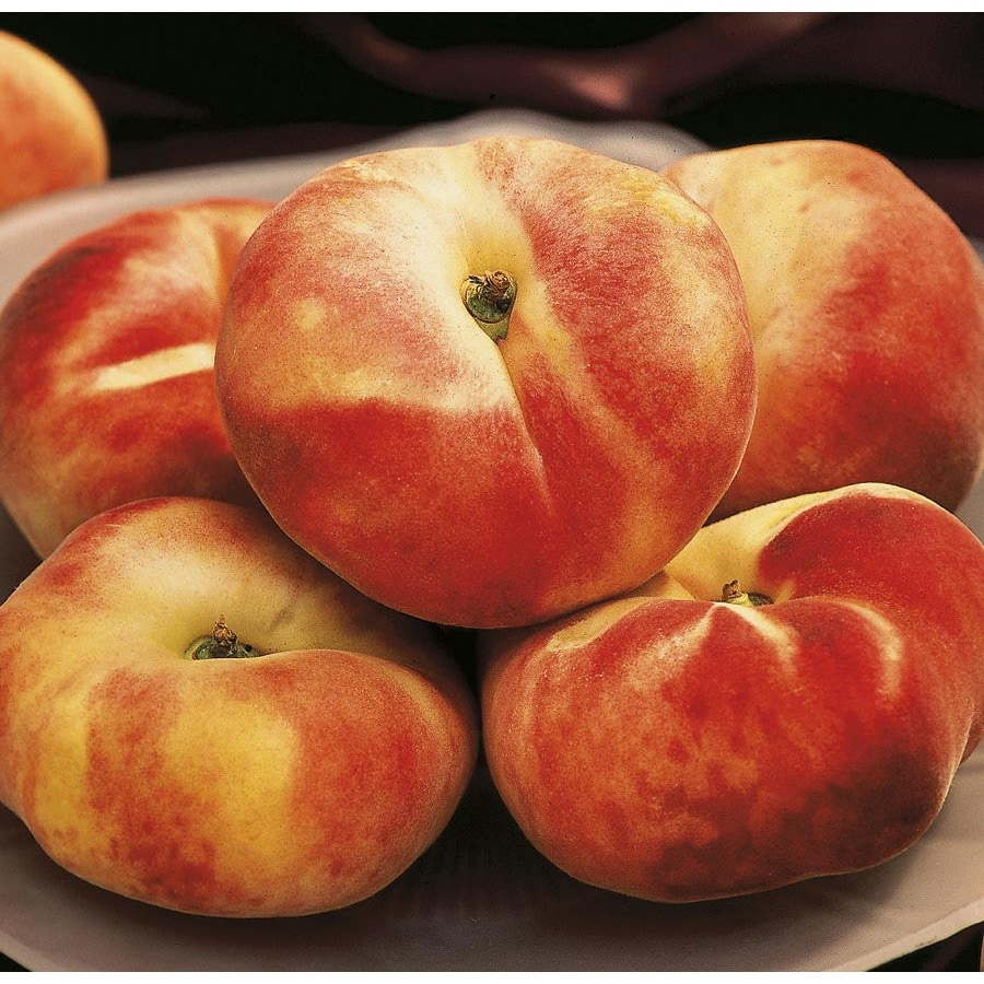 9-Gallon Sweet Cap Peach Tree (LW03438)