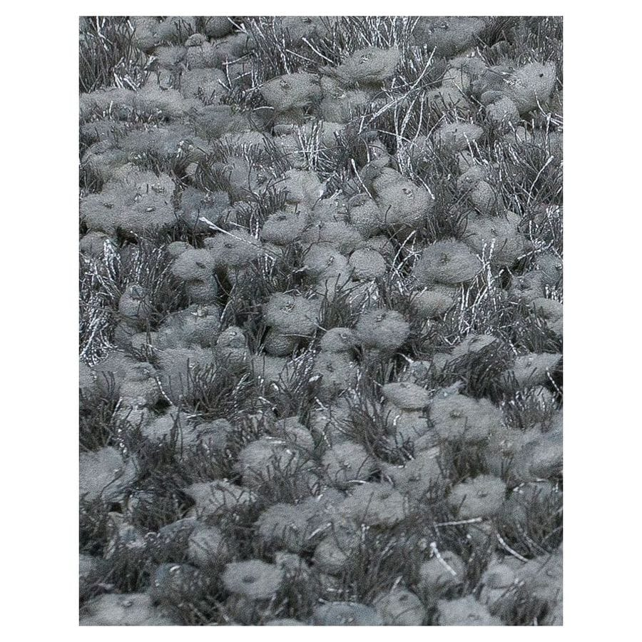 KAS Rugs Classy Shag Silver Rectangular Indoor Shag Area Rug (Common: 5 x 7; Actual: 60-in W x 84-in L)