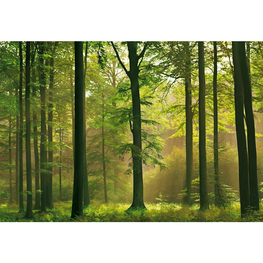 Shop brewster wallcovering ideal decor scenic murals at for Brewster wall mural