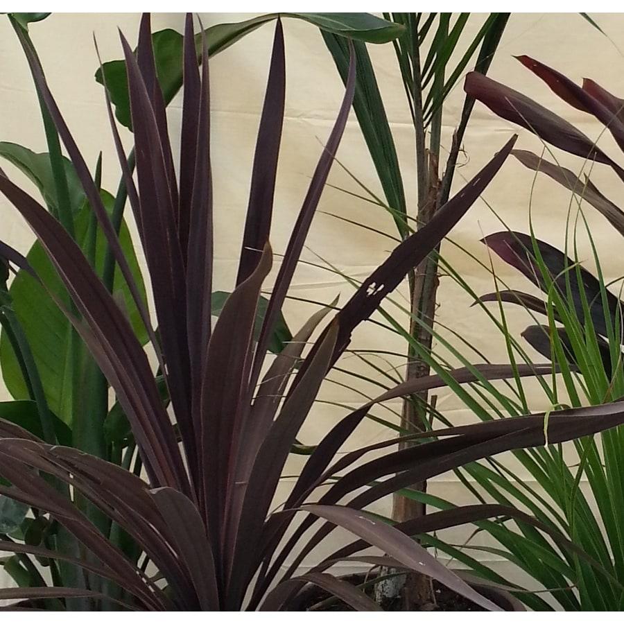 3.1-Gallon Palm Mixed