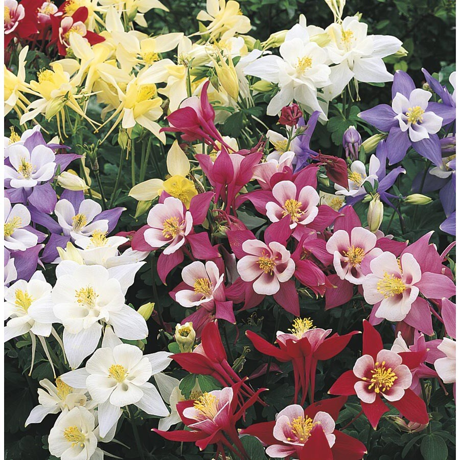 Shop 25 quart columbine l4950 at lowes 25 quart columbine l4950 izmirmasajfo