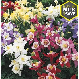 Shop perennials at lowes 1 quart columbine l4950 mightylinksfo