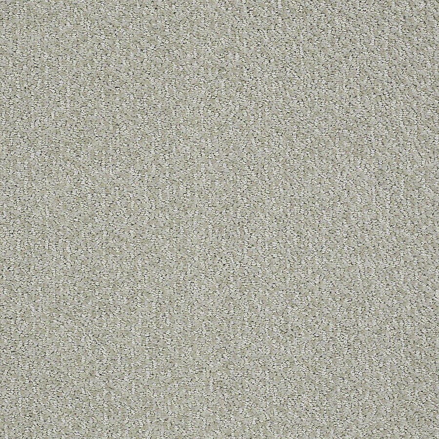 STAINMASTER PetProtect Bianca 12-ft W x Cut-to-Length Milo Berber/Loop Interior Carpet