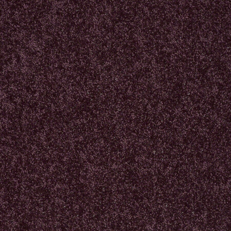 Shaw Batter Up II 12-ft W x Cut-to-Length Royal Purple Textured Interior Carpet