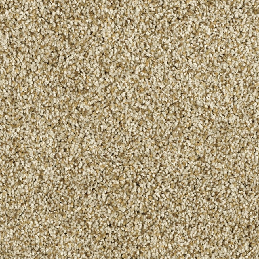 Shaw Essentials Soft and Cozy II- T 12-ft W Dunes Textured Interior Carpet
