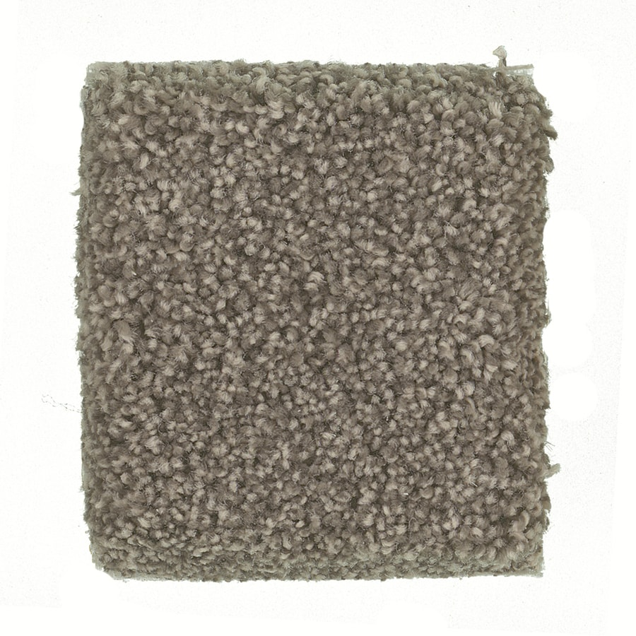 STAINMASTER Petprotect Greyhound- Feature Buy Bouvier Textured Interior Carpet