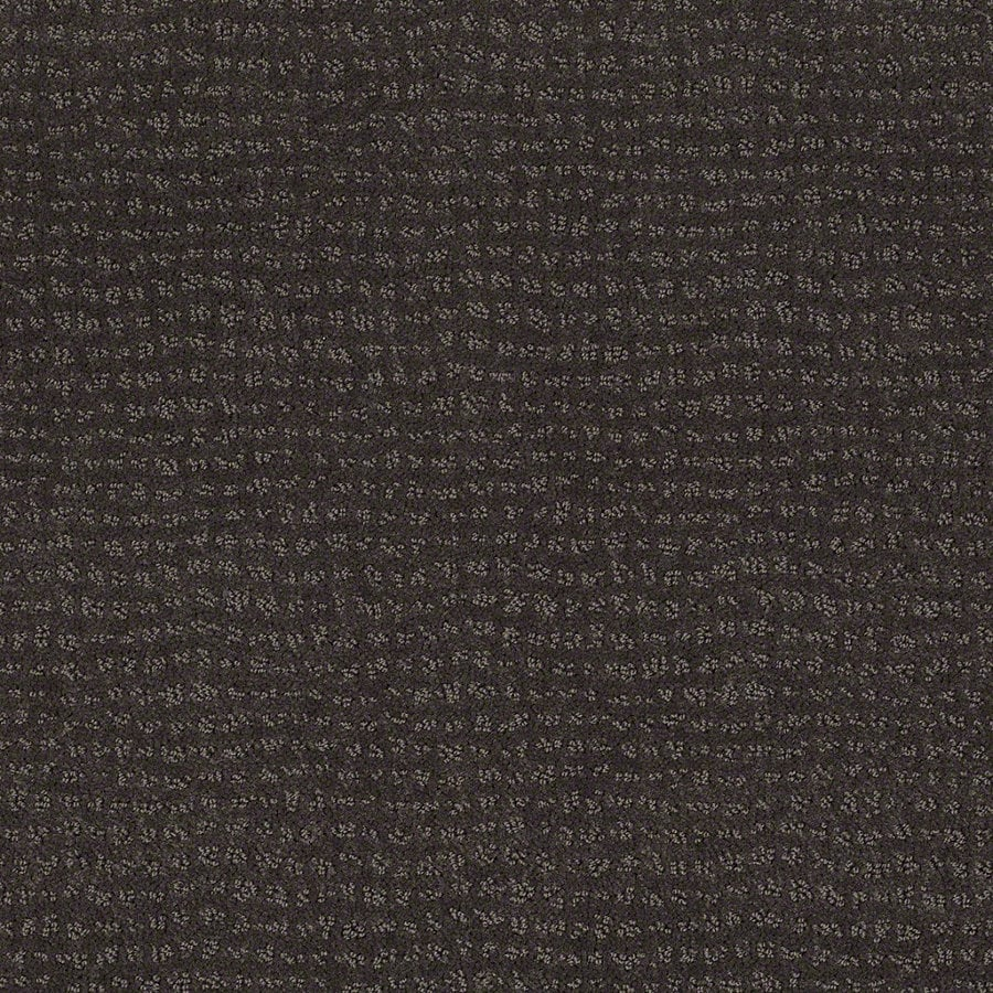 STAINMASTER Active Family Undisputed Falcon Berber/Loop Interior Carpet