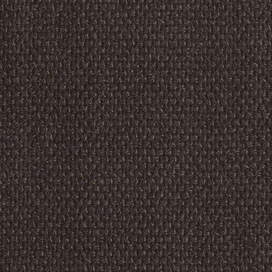 STAINMASTER Active Family St Thomas Falcon Berber Indoor Carpet