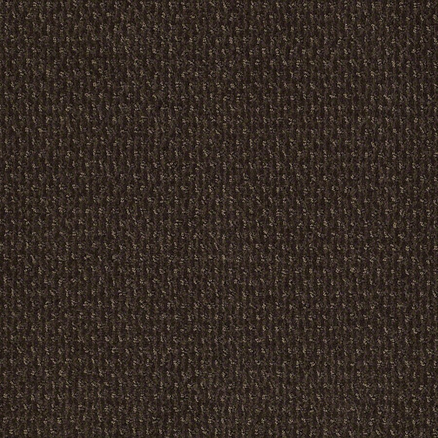 STAINMASTER Active Family St Thomas Dark Earth Berber/Loop Interior Carpet
