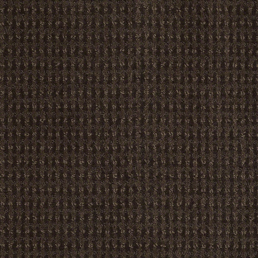 STAINMASTER Active Family St John Dark Earth Berber/Loop Interior Carpet