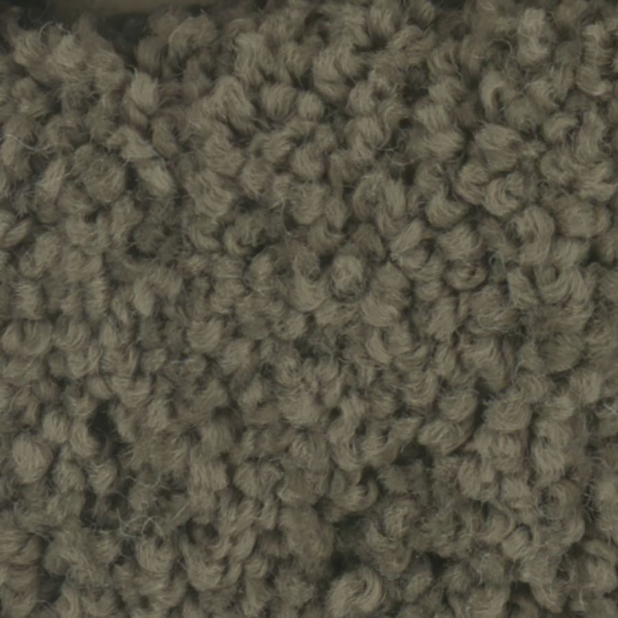 STAINMASTER TruSoft Subtle Beauty 12-ft W x Cut-to-Length Mistle Toe Textured Interior Carpet