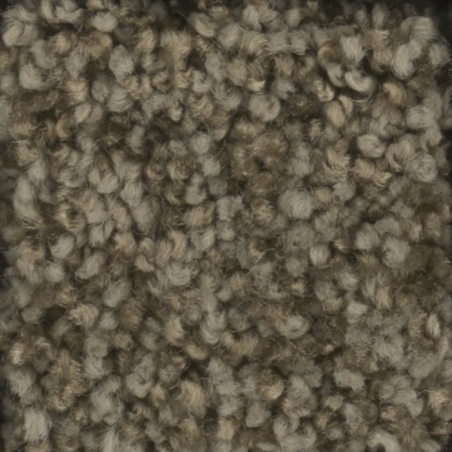 STAINMASTER TruSoft Dynamic Beauty 2 12-ft W x Cut-to-Length Briar Patch Textured Interior Carpet