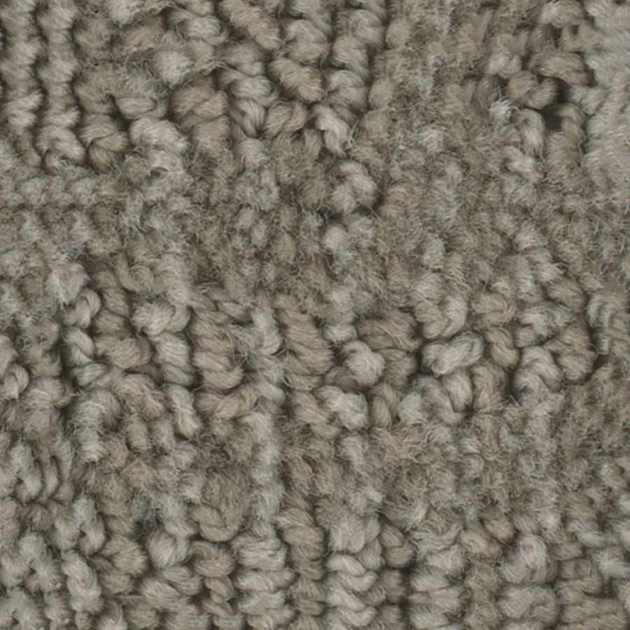 STAINMASTER PetProtect Bianca Milo Berber/Loop Interior Carpet
