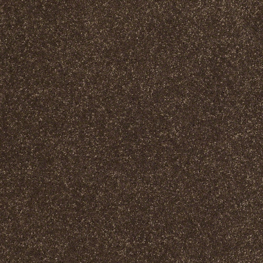 STAINMASTER Trusoft Classic I (S) Dark Chocolate Textured Interior Carpet
