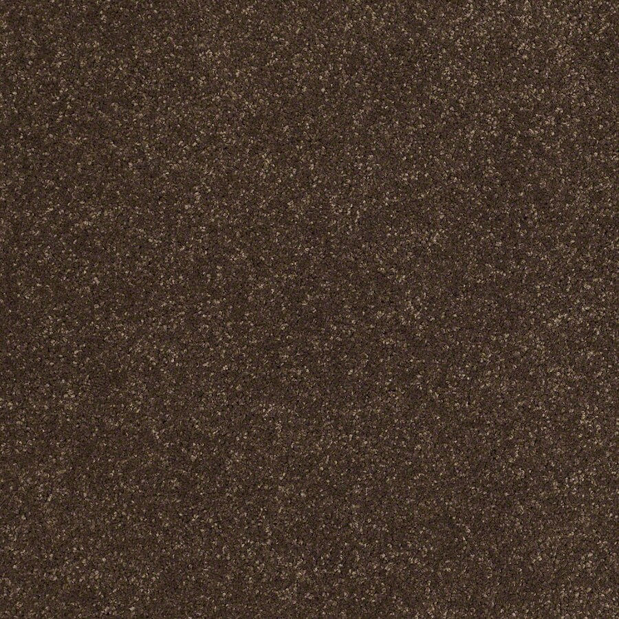 STAINMASTER TruSoft Classic II (S) Dark Chocolate Textured Indoor Carpet
