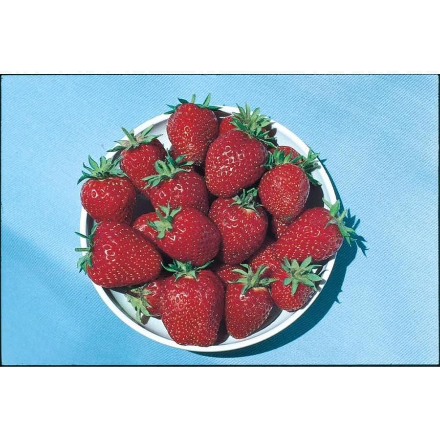 2.87-Quart Strawberry Small Fruit (L00574)