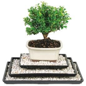 Bonsai supplies Plant Care & Protection at Lowes com