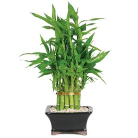 House Plants At Lowes Com