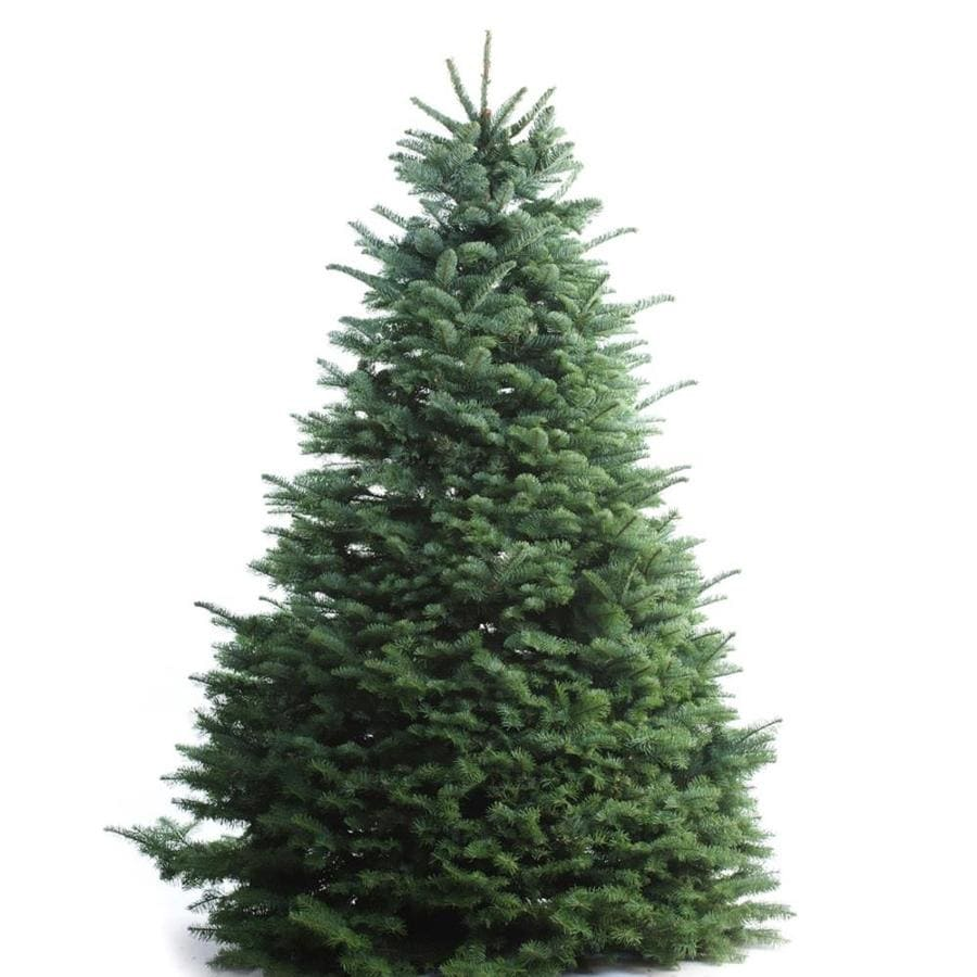Real Christmas Trees Lowes: 5-6 Ft Noble Fir Real Christmas Tree At Lowes.com