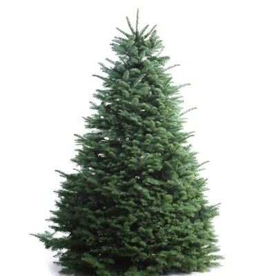 Real Christmas Trees Near Me.5 6 Ft Noble Fir Real Christmas Tree At Lowes Com