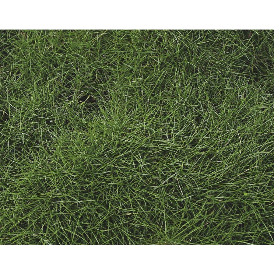 1-Flat Korean Velvet Grass (L2909)