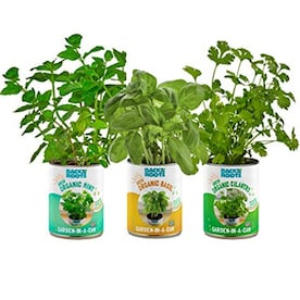 Back to the Roots Kitchen Herb Garden Organic Basil, Mint, and Cilantro Grow Kit