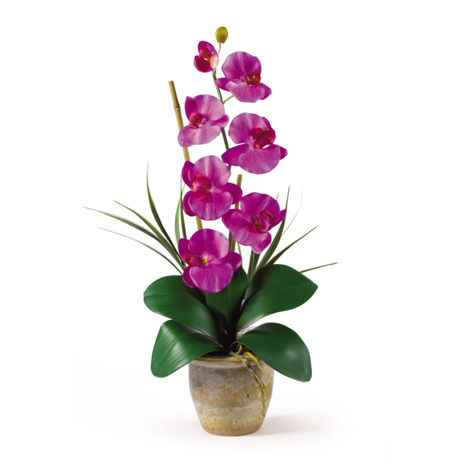 Nearly Natural 21-in Orchid Phalaenopsis Orchid