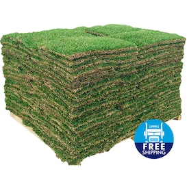Harmony Outdoor Brands 500-sq ft St. Augustine Sod Pallet