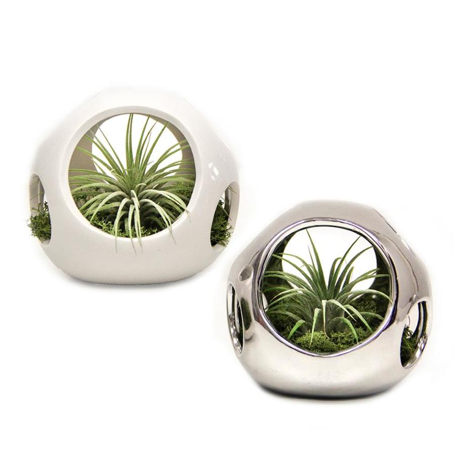 LiveTrends 2 Pack Air Plant (mixed) Planter (L2596)