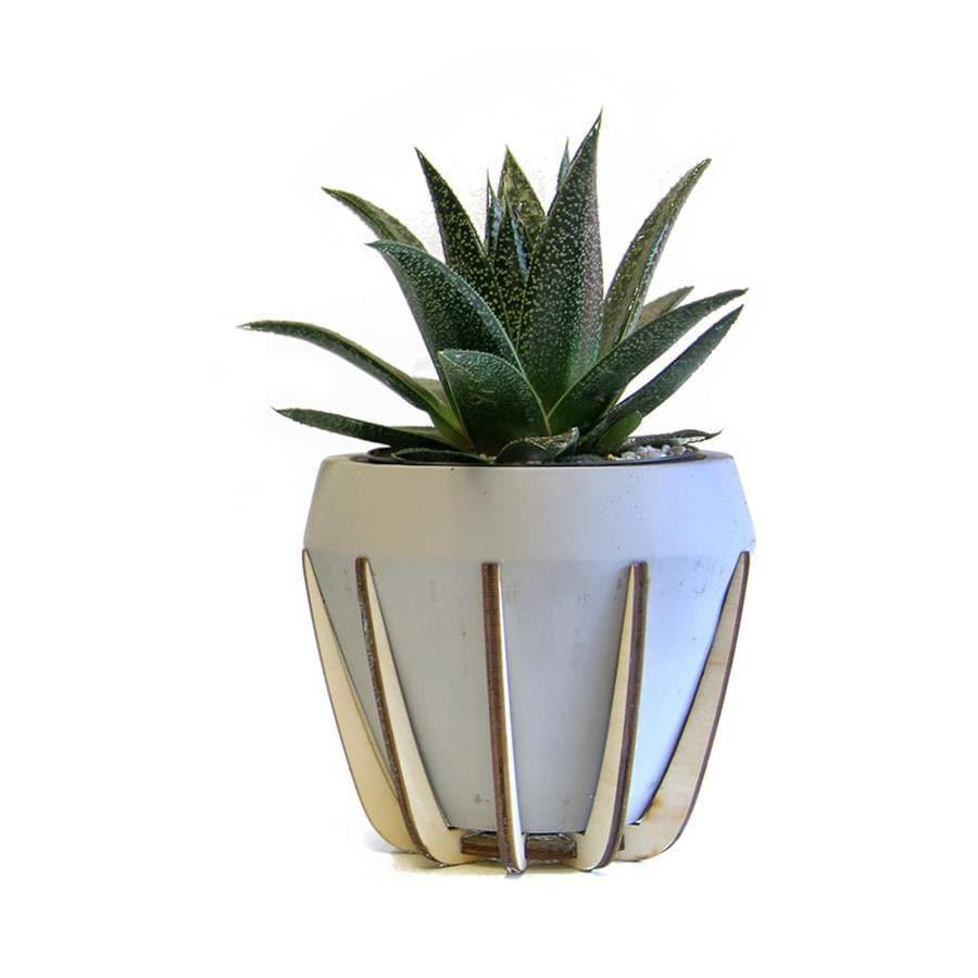 LiveTrends Succulent (Mixed) Planter (L22966)