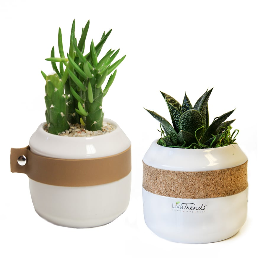 LiveTrends 2-Pack Cactus (mixed) Planter (L2922HP)