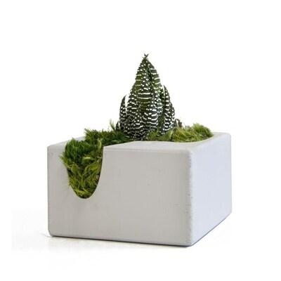 Christmas Succulent Planters.2 3 Oz Succulent In Ceramic Planter Assorted