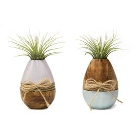 Livetrends 2 Pack Air Plant In Wood And Ceramic Planter L21596