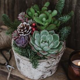 Christmas Succulent Gift Ideas.Planter Succulents At Lowes Com