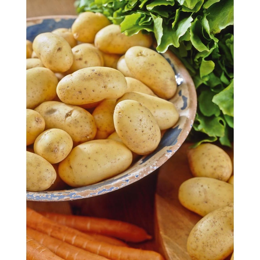 5 lb Yukon Gold Potato Plant (LB21585)