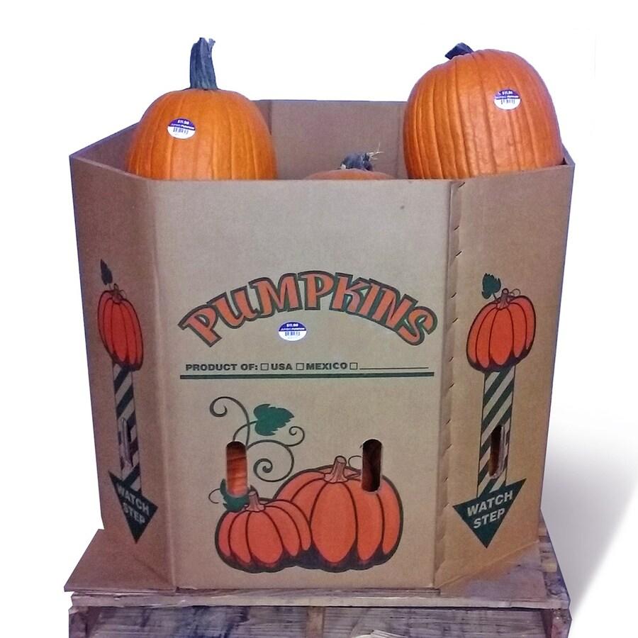 Orange Extra-Large Carving Pumpkin