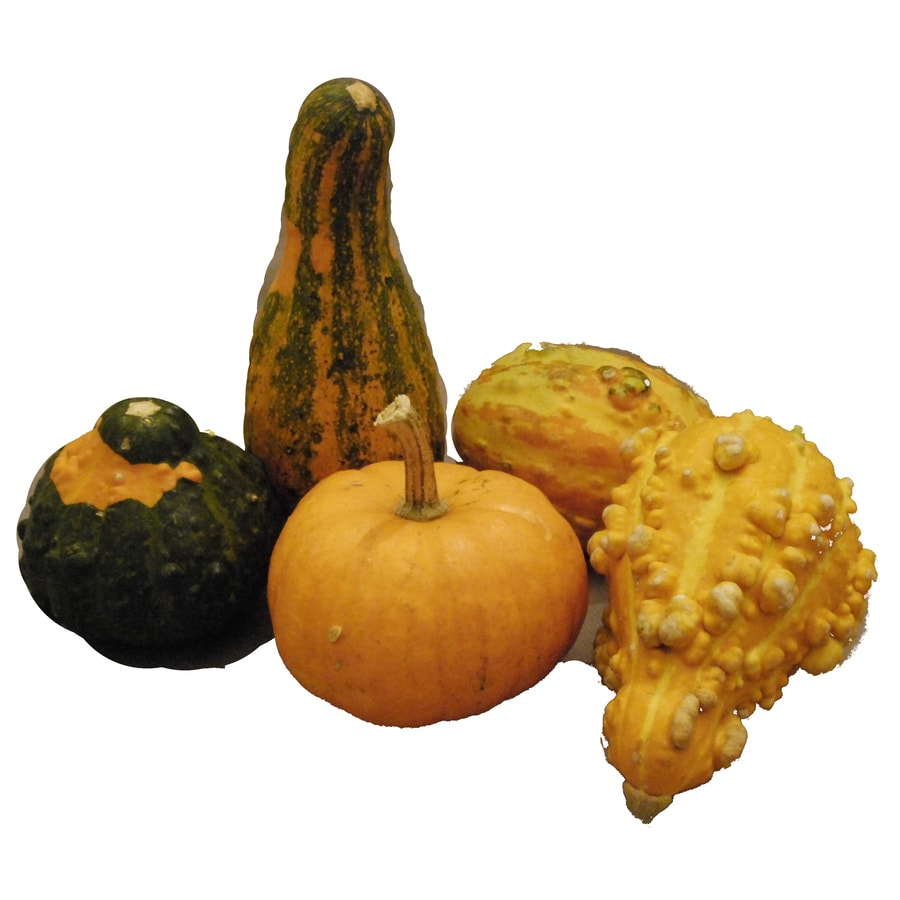 Shop 5 Pack Multiple Color Gourds At Lowes Com