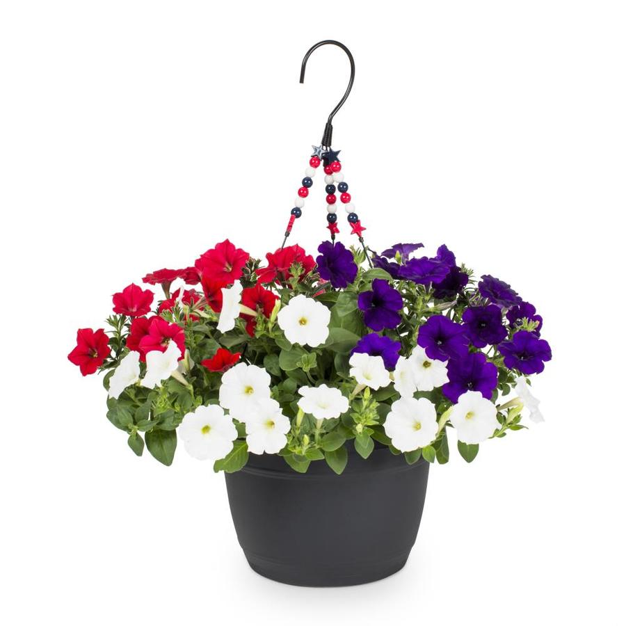 1.5-Gallon Hanging Basket Red, White and Blue Petunia (L27065)