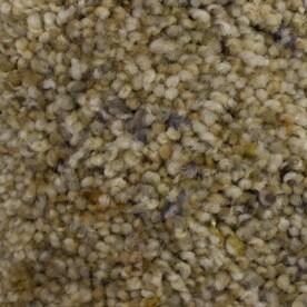 Stainmaster Petprotect Carpet At Lowes Com