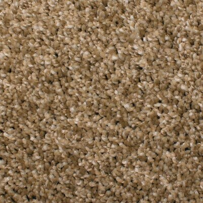 Stainmaster Cornerstone Coquina Mixed Stone Carpet Sample At Lowes Com