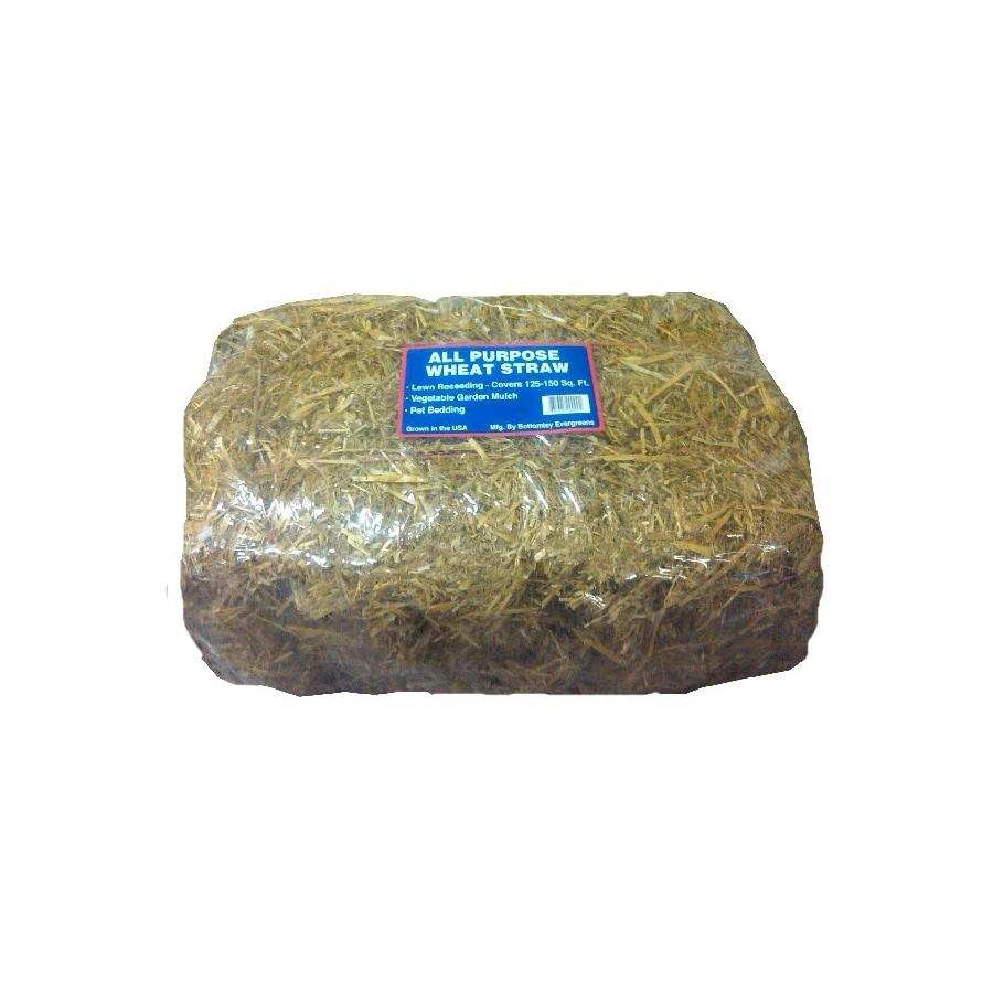 Evergreen Wheat Straw