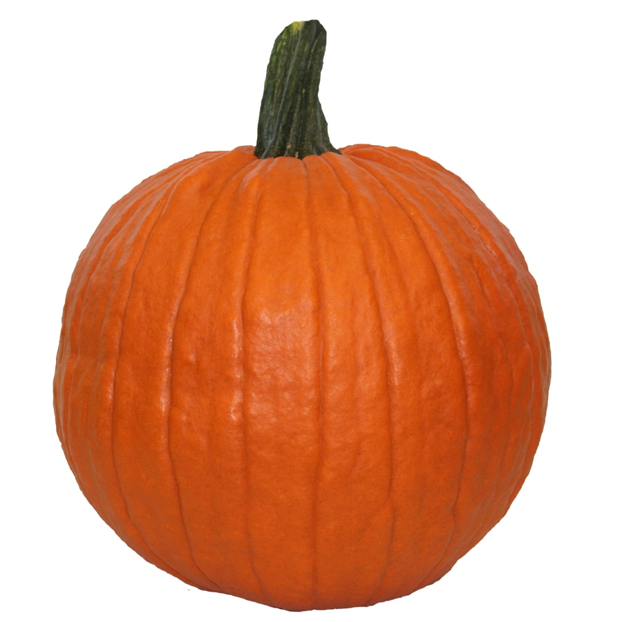 Shop Orange Small Carving Pumpkin At Lowes Com