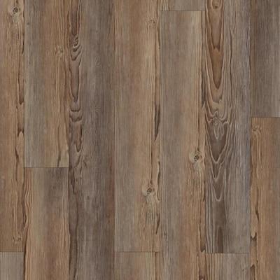 Norfolk Pine Luxury