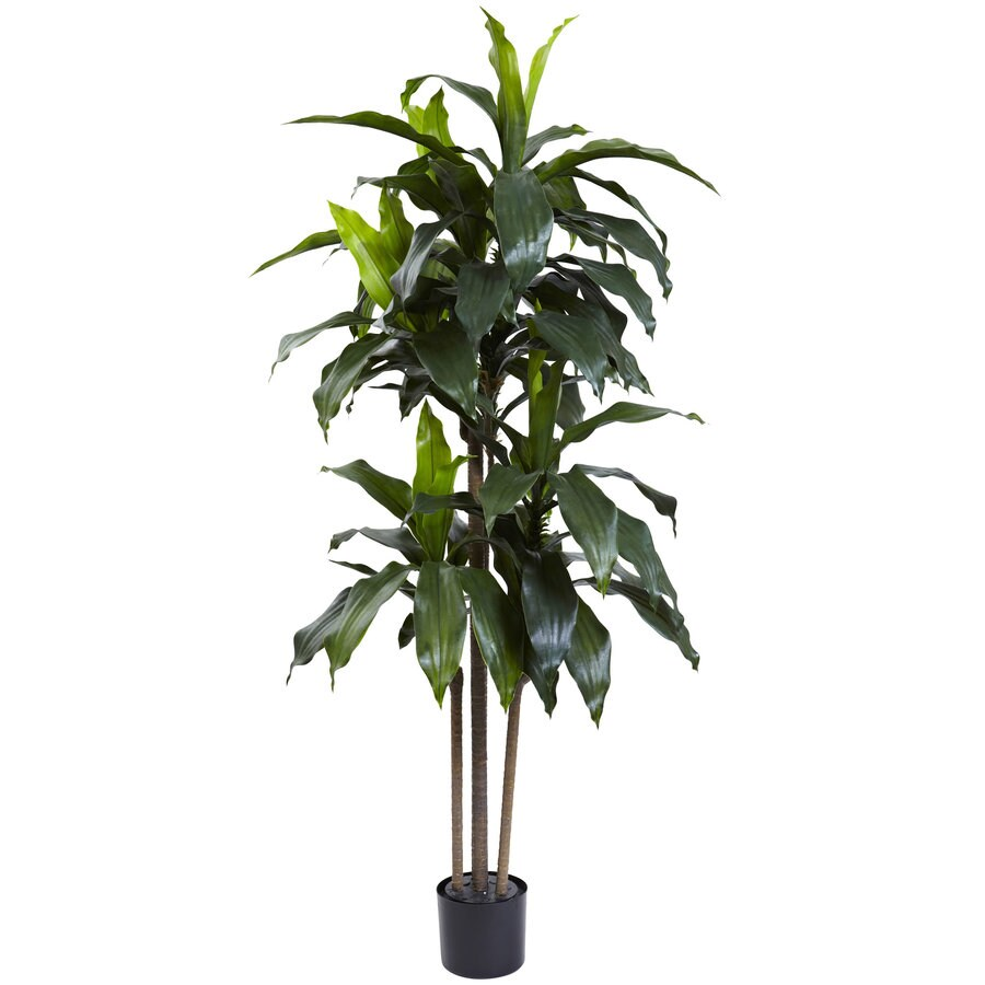 Nearly Natural 60-in Green Dracaena