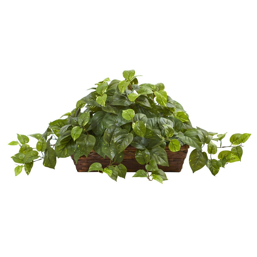 Nearly Natural 15-in Green Pothos