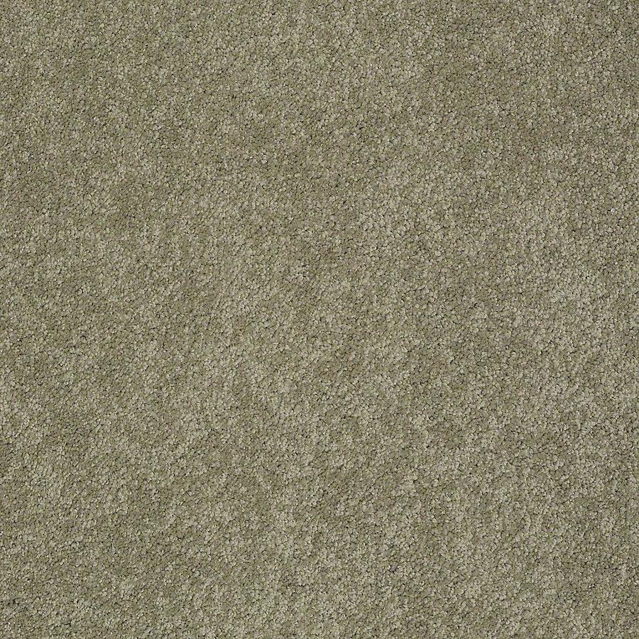 STAINMASTER Baxter II PetProtect Buddy Plush Carpet Sample